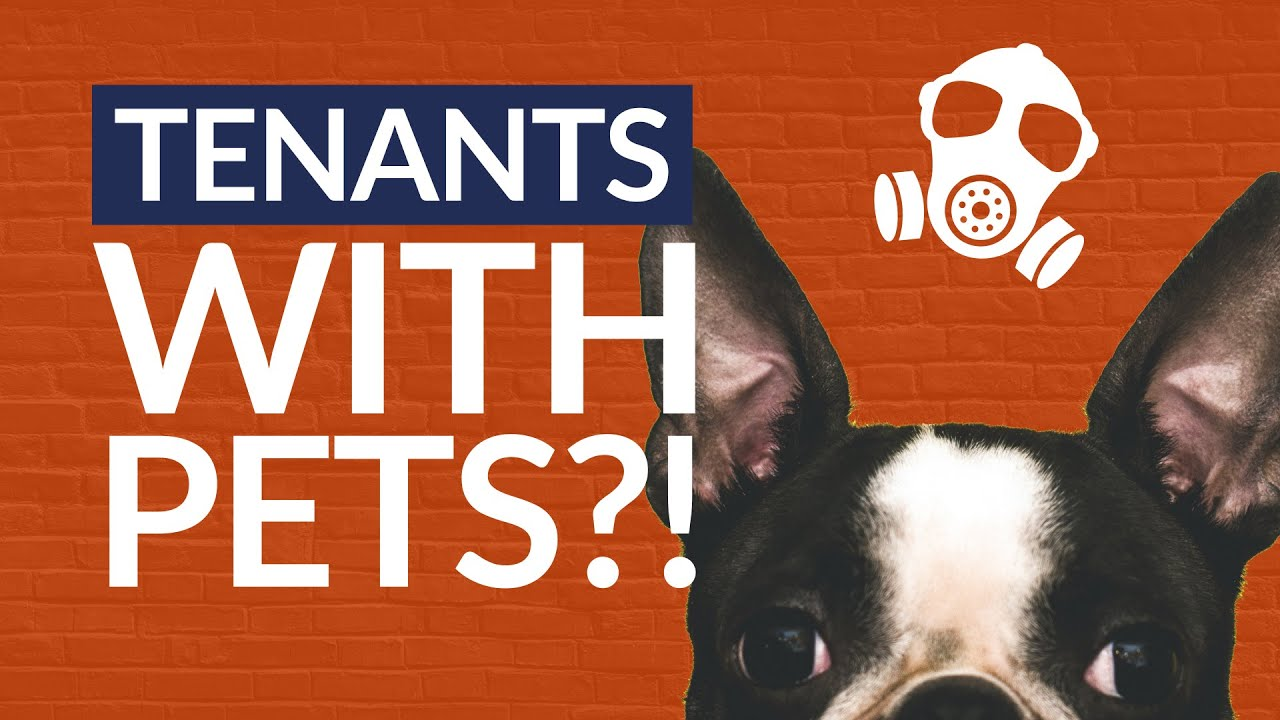 Renting With Pets Explained | Why Landlords Should Accept Tenant With Pets?